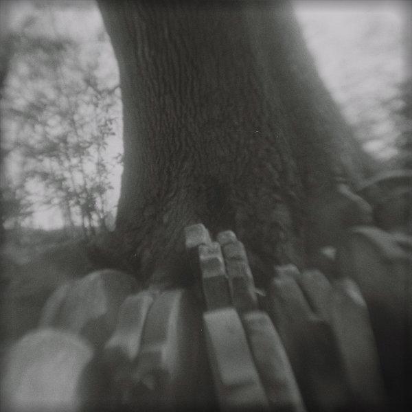 The Hardy Tree, London