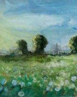 Oxeye Daisies, Dartford Marshes