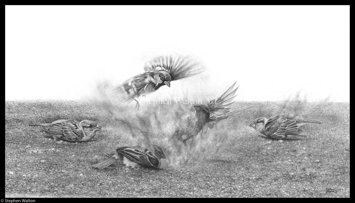 Dust Up (Sparrows)