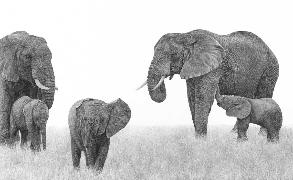 Five Elephants - Free to Live
