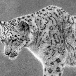 Ghost - Snow Leopard