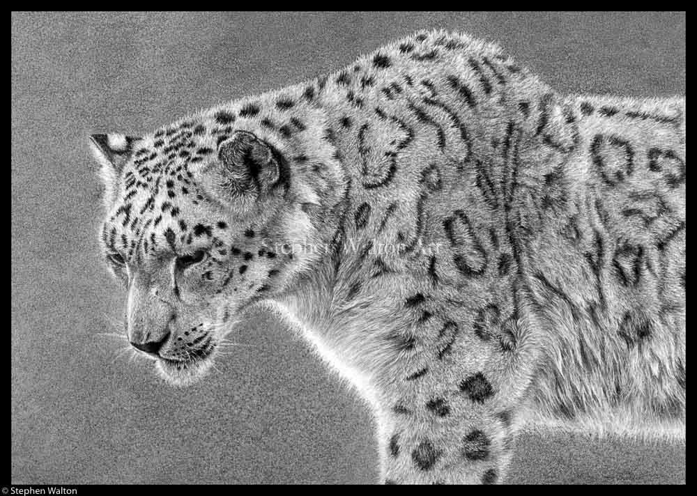 Ghost (Snow Leopard)