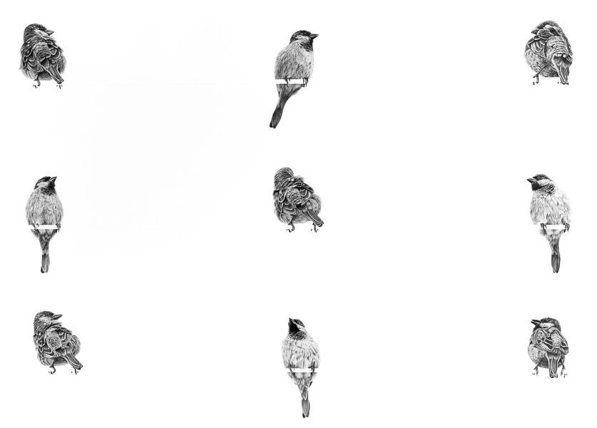 Grid of Nine - Sparrows