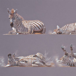 Grid of Nine No.1 - Young Zebra