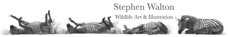Stephen Walton Fine Art