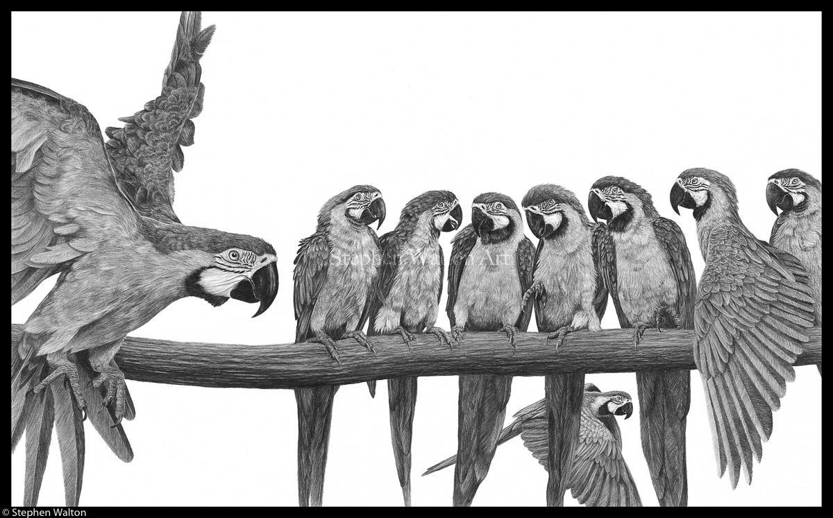 Nine Macaws (The Gossips)