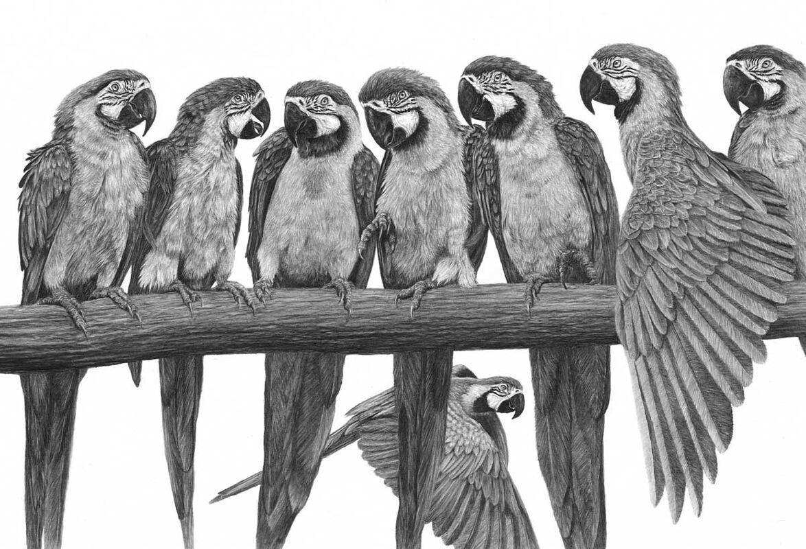 Nine Macaws - Gossiping