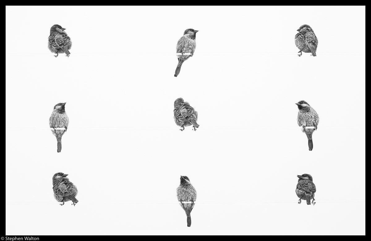 Nine Sparrows