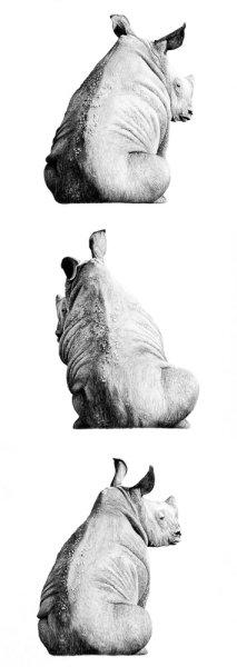 Rhino Column
