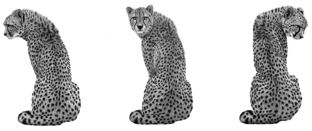 Sentinel (Cheetah)