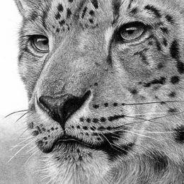 Snow Leopard II
