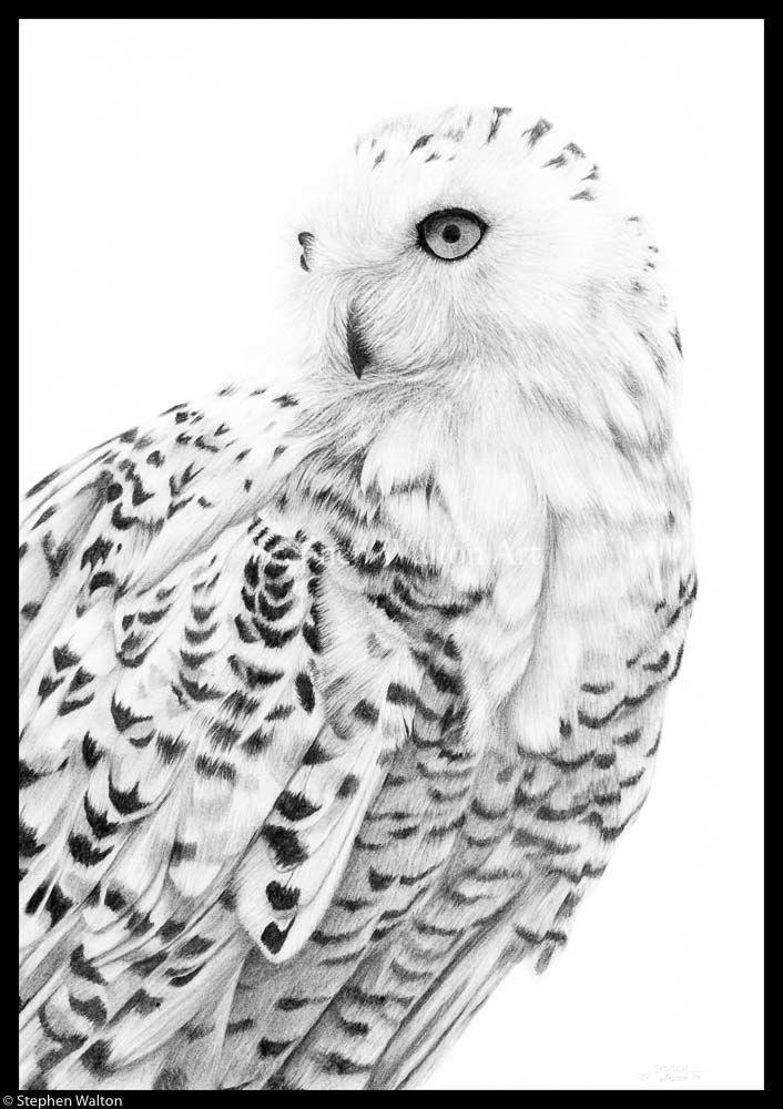 Snowy Owl III