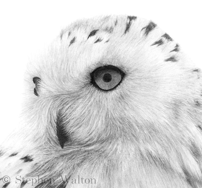Snowy Owl III - detail