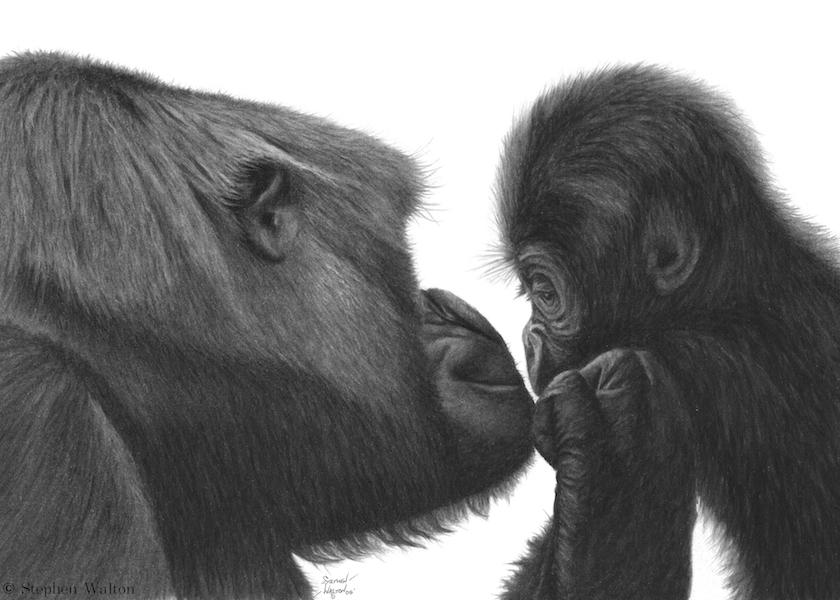 Two Gorilla's - Tenderness