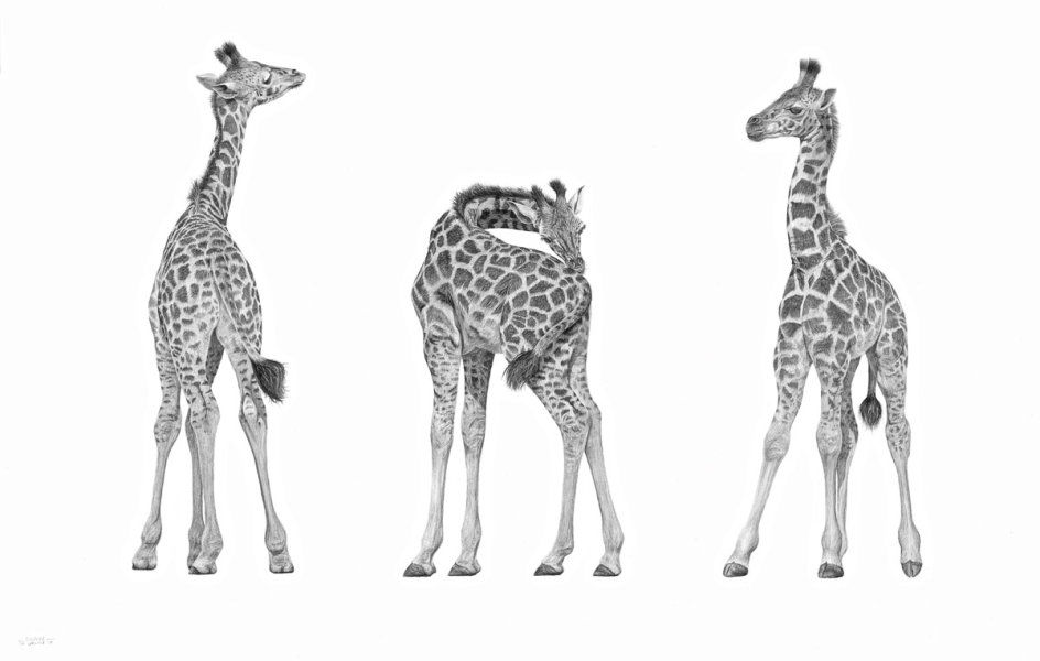 Three Giraffe - The Itch
