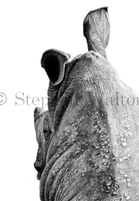 Rhino Column detail