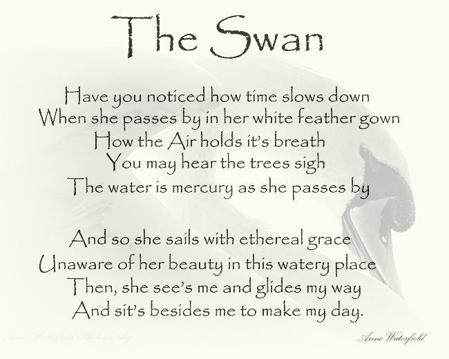A bit of Swan Therapy