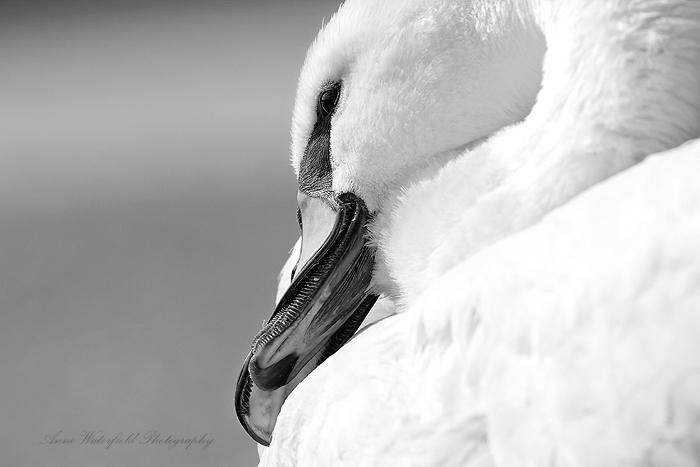 Broken Beak (We meet again) 1.
