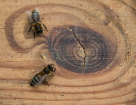 Two bees or knot two bees