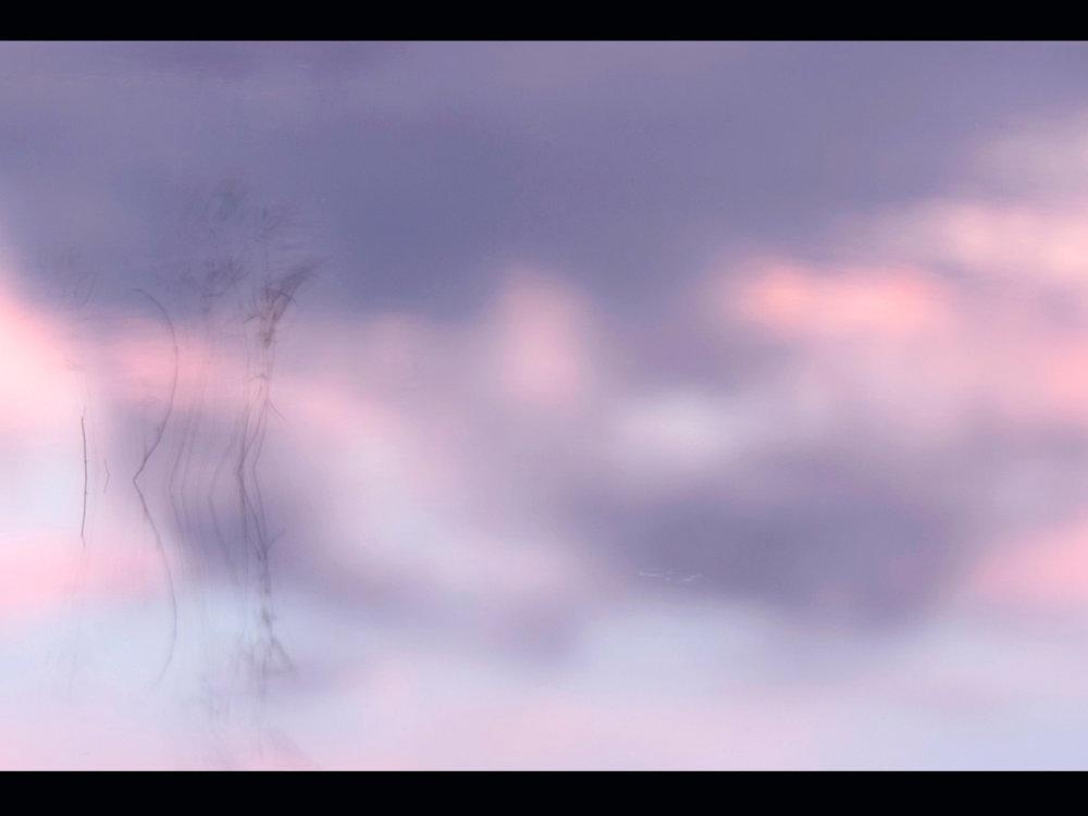 Reeds in an evening breeze