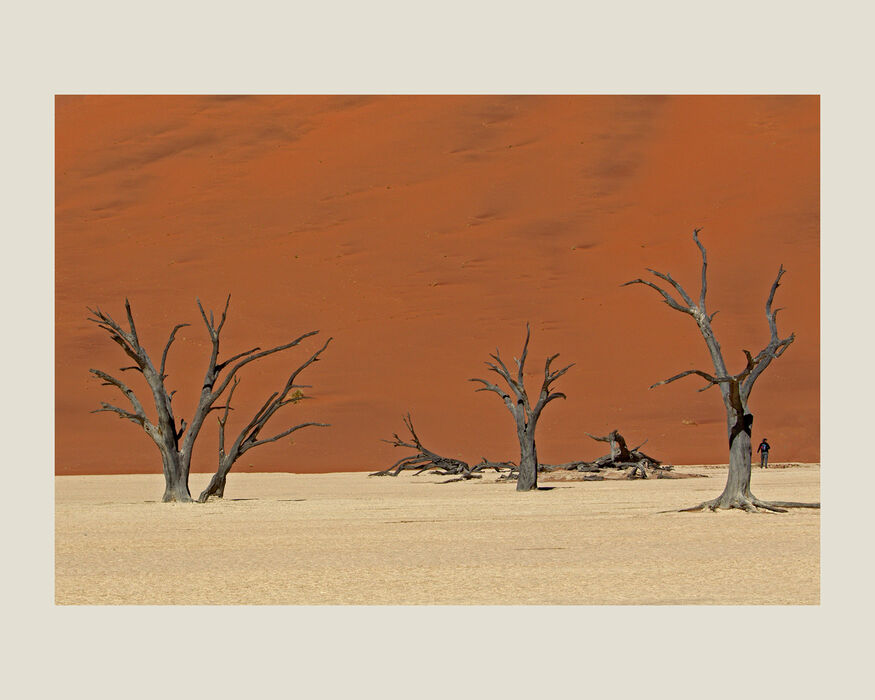 Dead Camel Thorn Trees Namibia (#43)