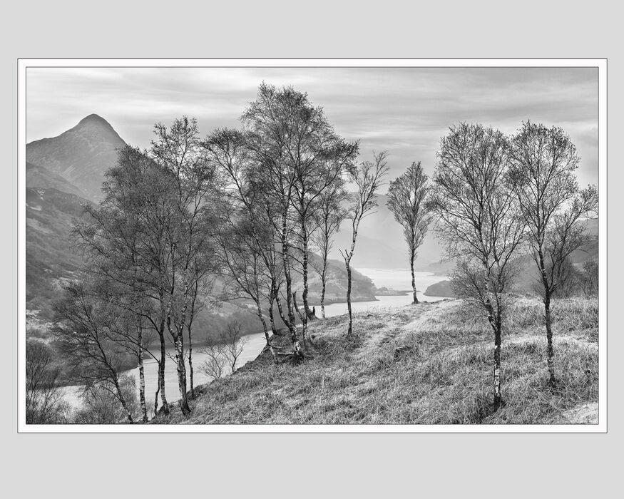 Silver birches Loch Leven (#4)