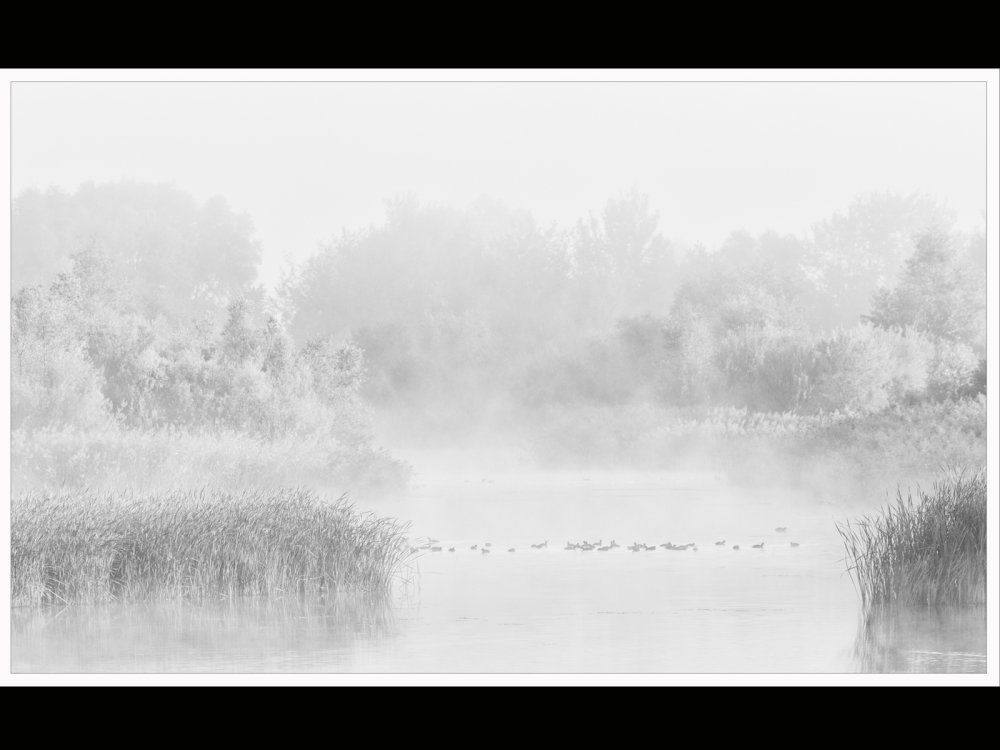 Mist over Elney Lake