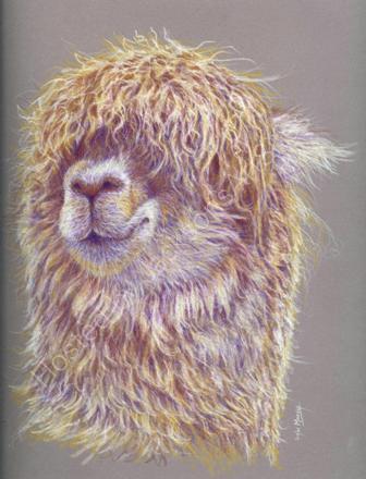 Alpaca in coloured pencils