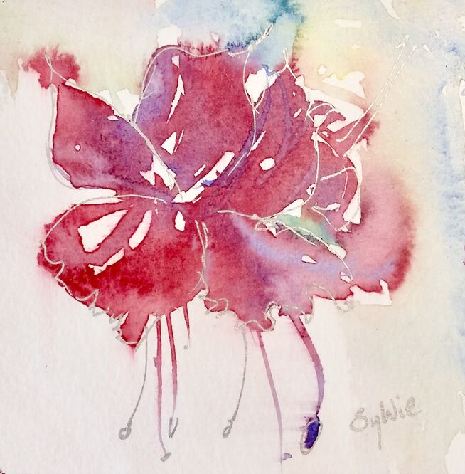 Fuschia in loosely painted watercolour