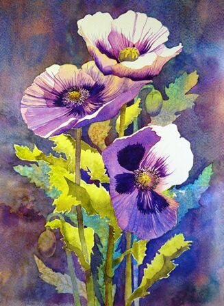 Garden poppies in watercolour