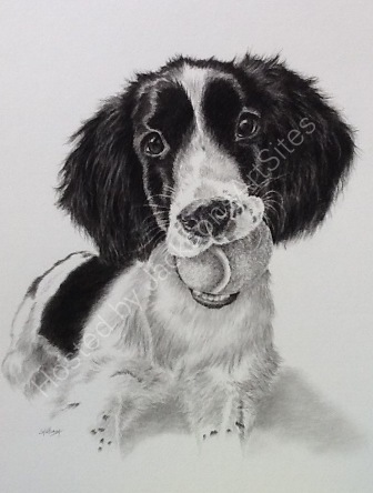 Rosie and tennis ball pencil drawing commission