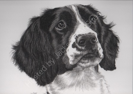Rosie pencil drawing commission