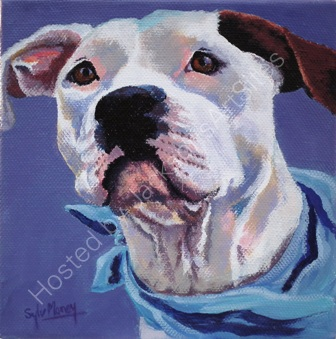 Staffy dog with bandana