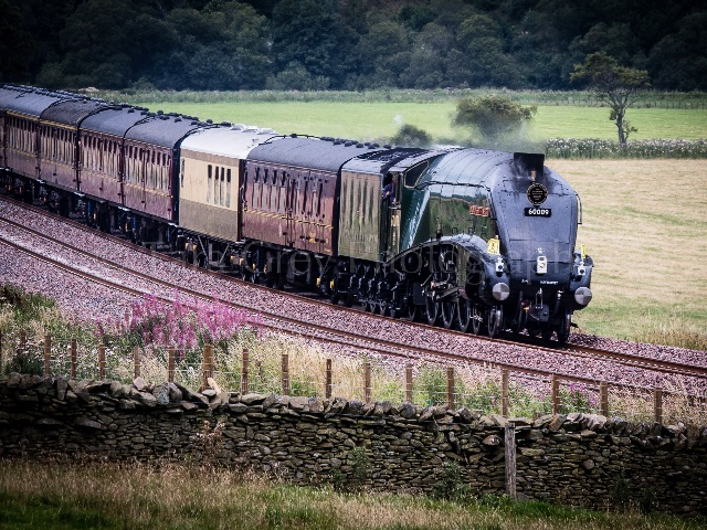 Royal Stream Train