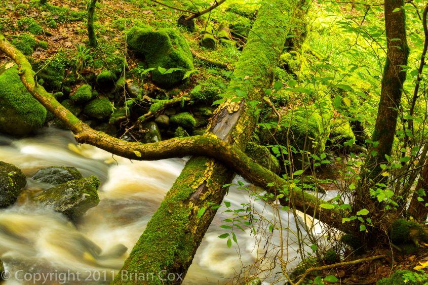 20110917-IMG 3845-Inchewan Burn, Birnam Glen