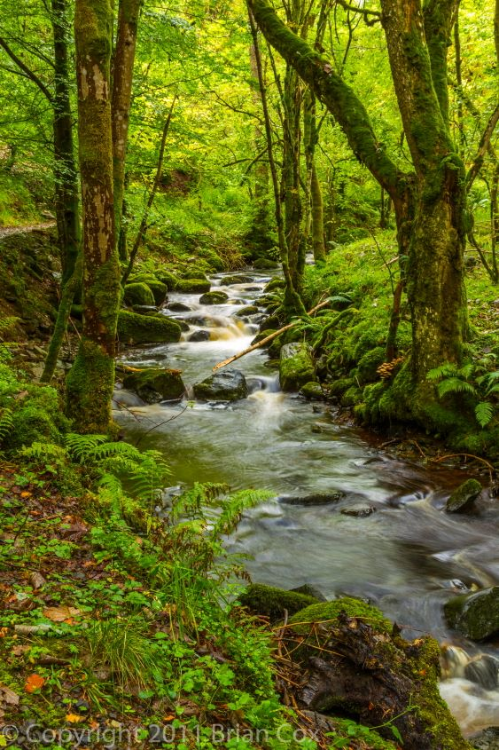 20110917-IMG 3871-Inchewan Burn, Birnam Glen