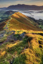 Late Summer  Cat Bells