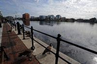 Salford Docks geese