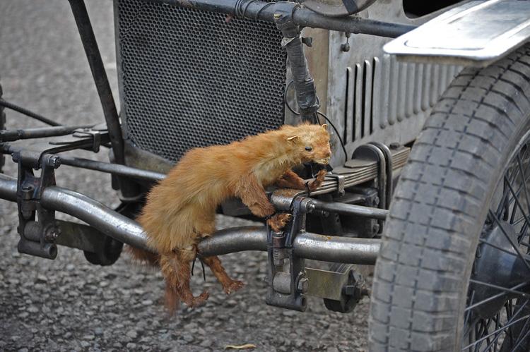 Ferret on The Piglet!