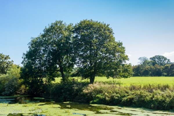 River Stour Blandford