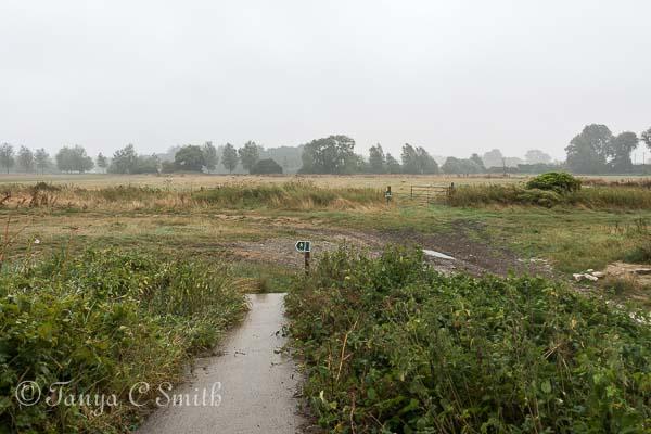 Blustery Wet Landscape