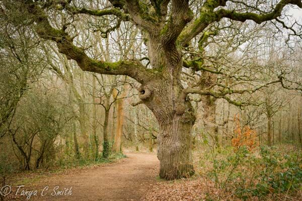Dorset Woodland