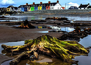 4,500 year old tree stumps, Borth beach, Wales