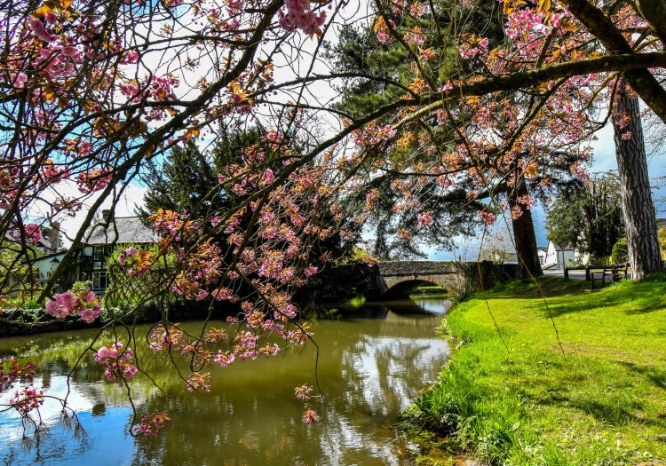 Blossom by the river Arrow at Eardisland, Herefordshire,UK