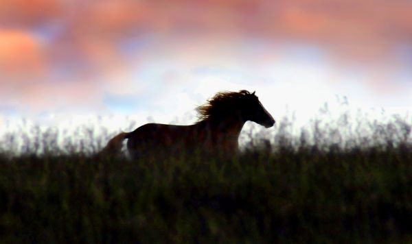 Wild Horse on the Epynt Hills, Wales, UK