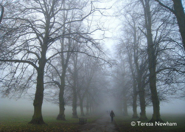 Misty Morning, Rothamsted Park