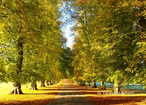 Rothamsted Park in Autumn