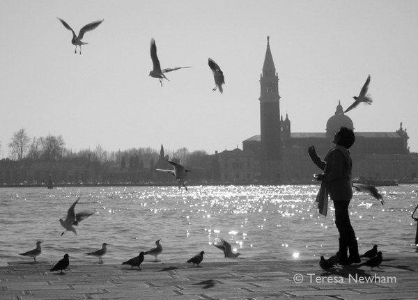 Feeding the Birds, Venice