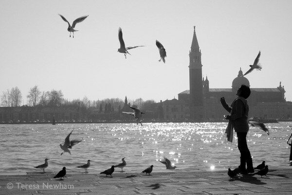 Feeding the Birds, Venice