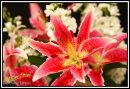 Flowers/Macro